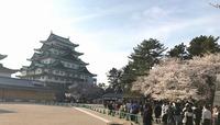 s-名古屋城桜.jpg